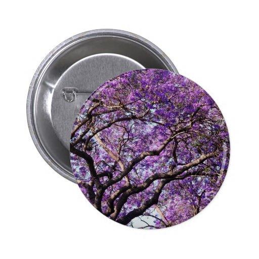 Árbol del Jacaranda en flores de la floración de l Pin