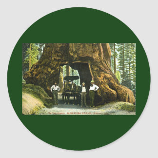 Árbol grande Wawona, arboleda de Mariposa, vintage Pegatina Redonda