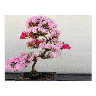 Árbol rosado de los bonsais postal