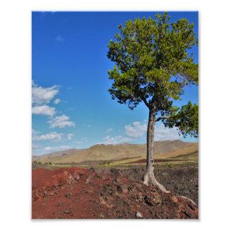 Árbol solo impresiones fotográficas