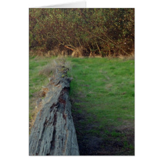 Árbol tragado, Santa Cruz (tarjeta) Tarjeta De Felicitación