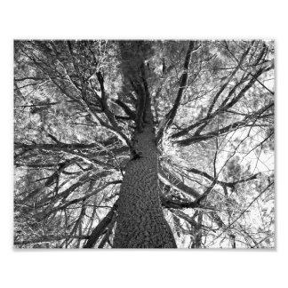 Árbol viejo de Abtract Arte Con Fotos