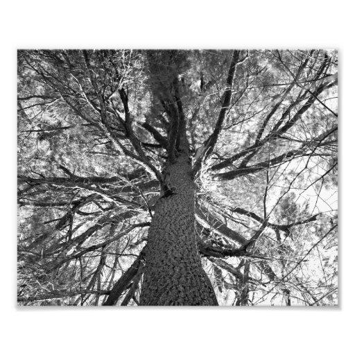 Árbol viejo de Abtract Fotografías