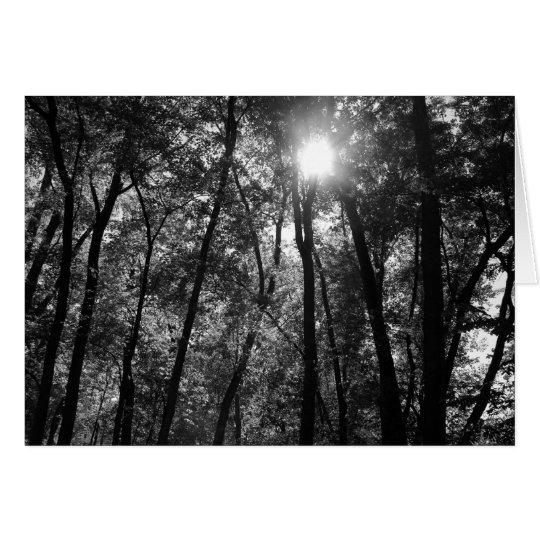 Árbol y tarjeta de Sun (1)