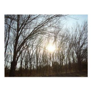 Arboleda del árbol con luz del sol postal