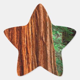 Arboleda Yosemite de Mariposa de la secoya gigante Pegatinas Forma De Estrella Personalizadas
