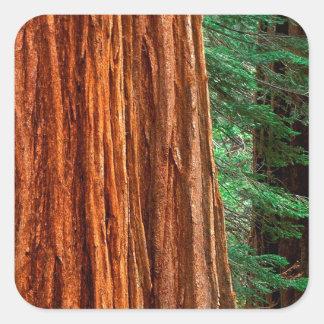 Arboleda Yosemite de Mariposa de la secoya gigante Calcomanías Cuadradas Personalizadas