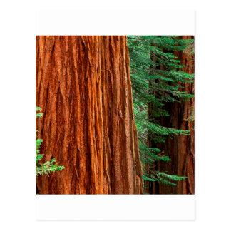 Arboleda Yosemite de Mariposa de la secoya gigante Postal