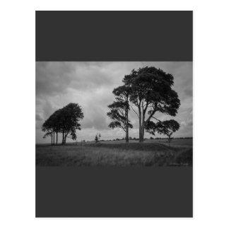 Árboles azotados por el viento postal