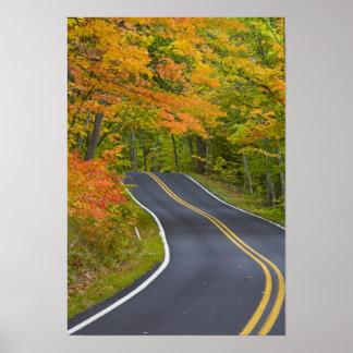 Árboles de arce coloridos en la línea del otoño es póster