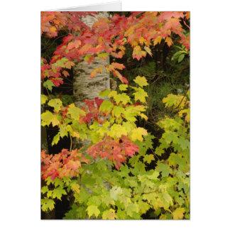 Árboles de arce del otoño y árbol de abedul, tarjeta