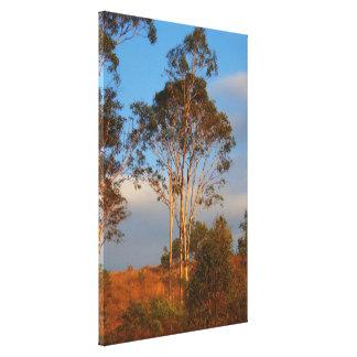 Árboles de goma australianos en la impresión de la