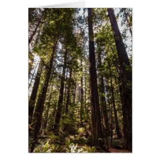 Árboles de la secoya - tarjeta de felicitación en