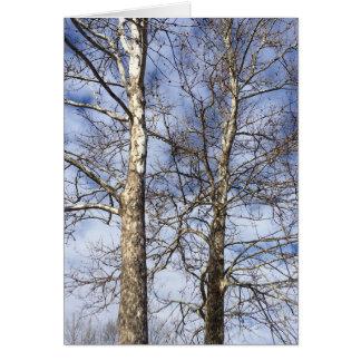 Árboles del sicómoro en un cielo del invierno --- tarjeta de felicitación