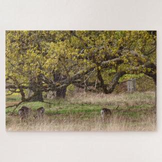 Árboles y rompecabezas de los ciervos