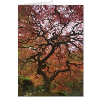 Arce japonés en el color 5 de la caída tarjeta