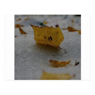 Arce tejido postal