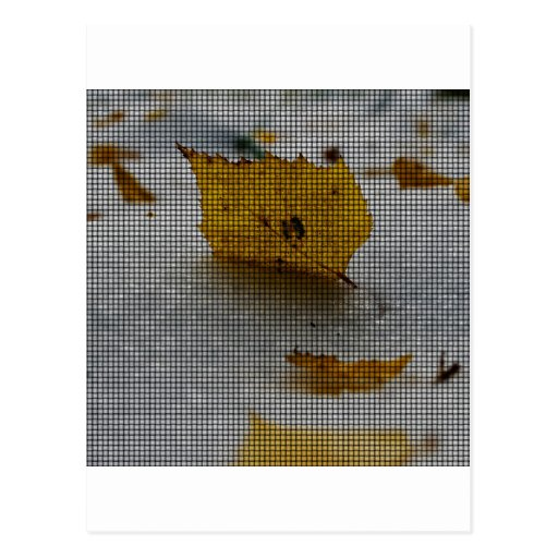 Arce tejido tarjeta postal