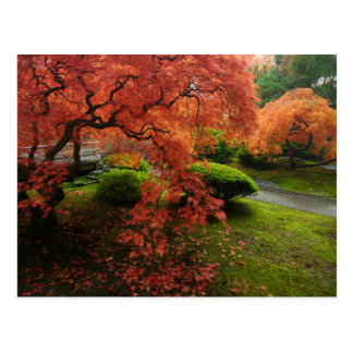 Arces japoneses en un jardín japonés en otoño postal