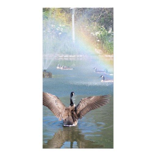 Arco iris de la gloria tarjetas fotograficas