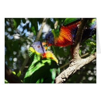 Arco iris juvenil Lorikeets Tarjeta De Felicitación