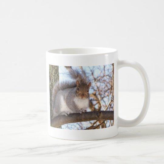 Ardilla en Snow.JPG Taza De Café
