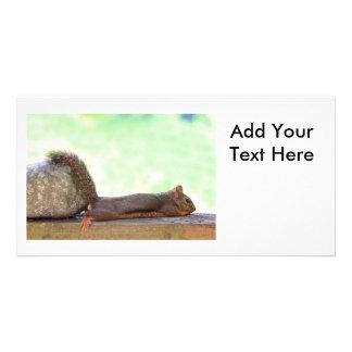 Ardilla perezosa tarjeta fotográfica personalizada