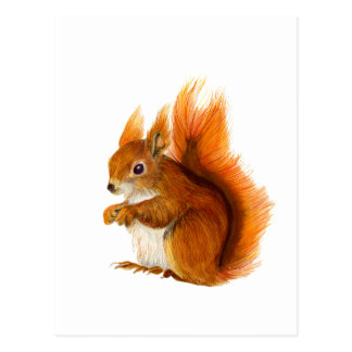 Ardilla roja pintada en arte de la fauna de la postal
