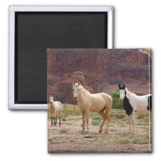 Arizona, reserva india de Navajo, Chinle, Imanes