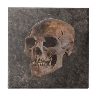 Arqueología II - Cráneo en fondo del Piedra-efecto Azulejo Cuadrado Pequeño