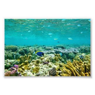 Arrecife de coral arte con fotos