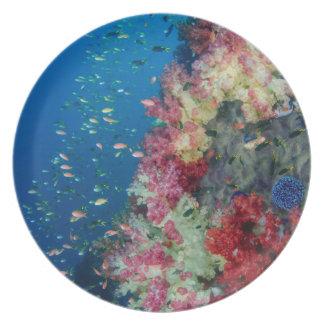Arrecife de coral subacuático, Indonesia Plato