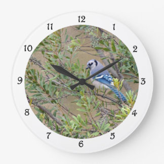 Arrendajo azul en reloj de pared meridional de