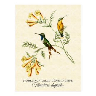 Arte atado chispeante del vintage del colibrí postal