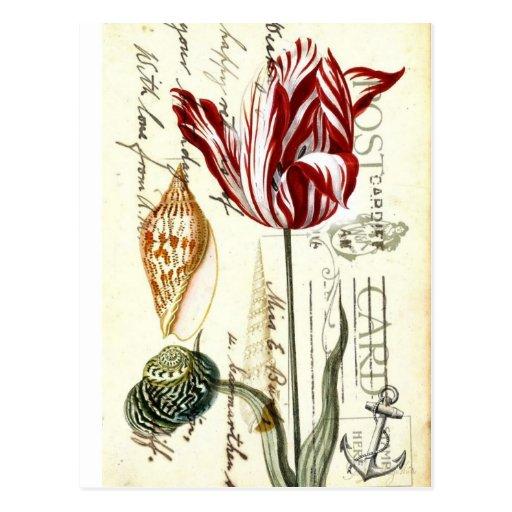Arte botánico de los tulipanes florales elegantes tarjetas postales