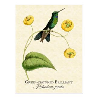 Arte brillante coronado verde del vintage del postal