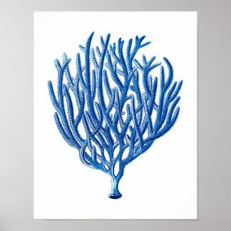 Arte coralino de la pared de la playa de la