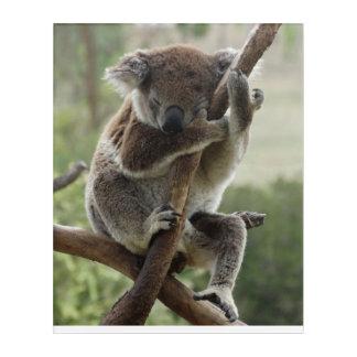Arte de la pared de la koala