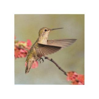 Arte de madera del colibrí