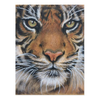 Arte del animal de la fauna del tigre postal