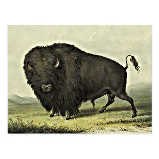 arte del búfalo postal
