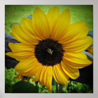 Arte del poster del girasol y de la abeja