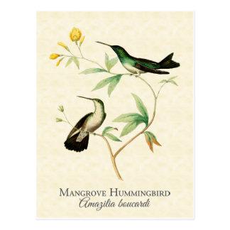 Arte del vintage del colibrí del mangle postal