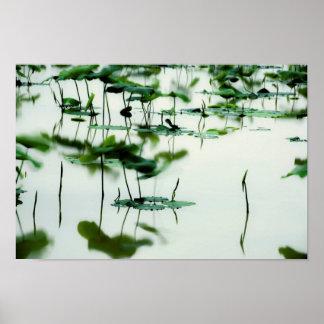 Arte fotográfico -6 del Fairyland de Lotus