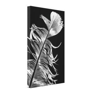 Arte negro y blanco de la pluma de la fotografía