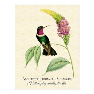 Arte Throated Amethyst del colibrí Postal