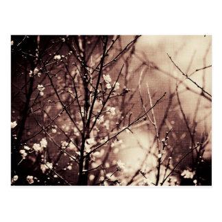 Artículo oscuro del flor del albaricoque postal