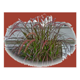 Artículos de coordinación de la hierba decorativa  postal