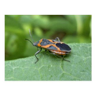 Artículos de coordinación del insecto de la ancian postal