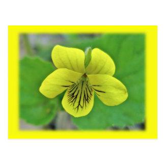 Artículos de coordinación violetas amarillos salva postales